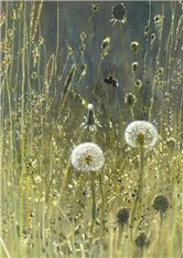 Dandelions and grasses