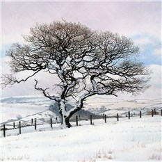 Upland Tree in Winter