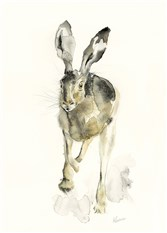 Brown Hare in Motion