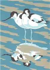 Reflection - Avocets