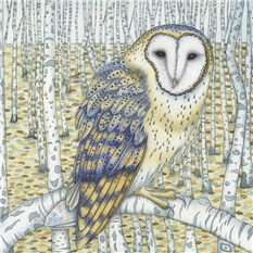 Barn Owl among Birch Trees