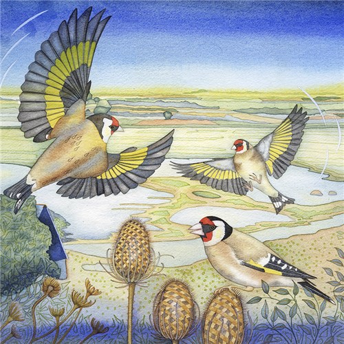 Goldfinches on Teasels