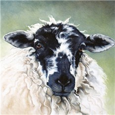 Sheep Portrait 4