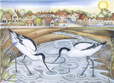 Avocets at Low Tide