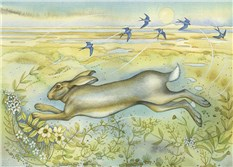 Hare on the Saltmarsh