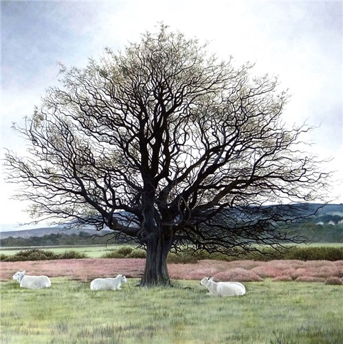 Sheep under Hawthorn