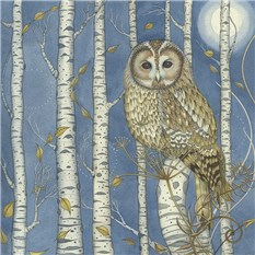 Tawny Owl among the Birches