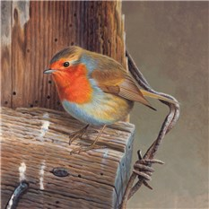 Robin on Post