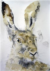 Head of a Hare