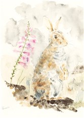 Rabbit with Foxglove
