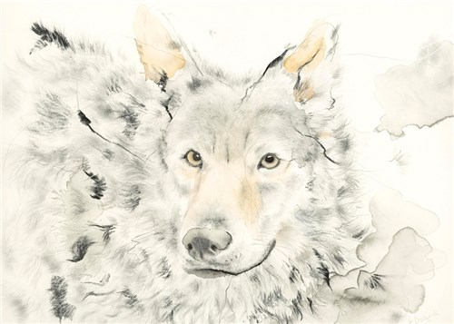 Head of a Timber Wolf